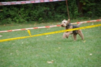 VfH - Hunderennen
